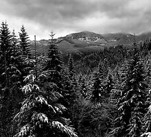 Snow In The Cascades ~ Oregon High Casacades ~ by Charles & Patricia   Harkins ~ Picture Oregon