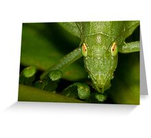 Nature's Eyes Greeting Card