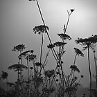 Monochrome Queen Anne&#x27;s Lace Silhouette by Scott Ruhs