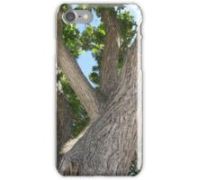 Tree Branches iPhone Case/Skin