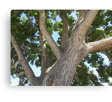Tree Branches Canvas Print