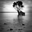 Mangrove by Christine  Wilson Photography