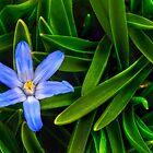 Ribbons Of Spring by Evelina Kremsdorf