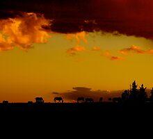 Pryor Mountain Wild Horses at Sunset by sandyelmore