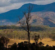 An Australian Landscape by Jordan Miscamble
