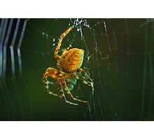 Orb-weaver spider Photographic Print