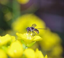Hover Fly on the yellow Flower by Linda Fury