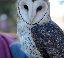 Owl by ©Josephine Caruana