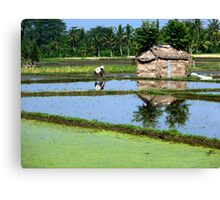 ceaseless work in the paddy fields Canvas Print
