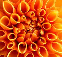 Dahlia in Orange by Audrey Clarke