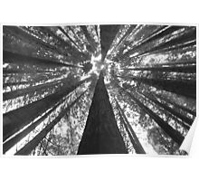 Up - Rewoods The Otways Poster