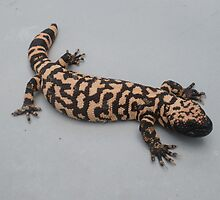 Goliath The Gila Monster by Kay Hale
