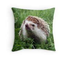 African pigmy hedgehog outdoors Throw Pillow