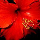 Elegant in Red by Esperanza Gallego