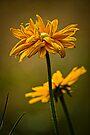 GOLDEN LAYERS by Sandy Stewart