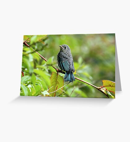 The Birds of Asia series # 13 Greeting Card