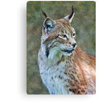 Siberian Lynx Canvas Print