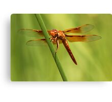 Fiery Red Dart Canvas Print