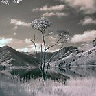 Buttermere lone tree by Rachel Slater