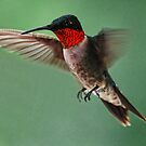 A Close Up of A Male Ruby Throated Hummingbird by barnsis