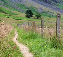 Scottish Countryside in the Afternoon by Lexx