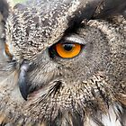 Owl Eye by Rob Emery