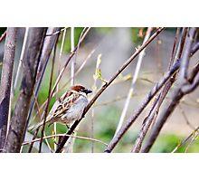 Bird on a Branch Photographic Print