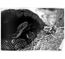 Snake in black & white Poster