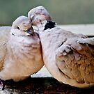 Sweet Love Birds by Lauren Neely