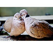 Sweet Love Birds Photographic Print