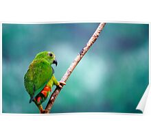 Little Green Bird Poster
