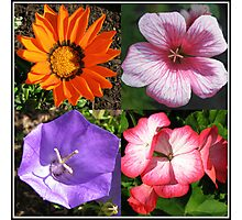 Pretty Foursome - Sunlit Summer Flowers Collage Photographic Print