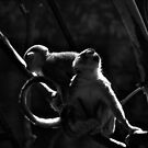 Monkeys in the Dark by Lauren Neely