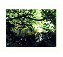 Undergrowth - Buntingsdale River Art Print