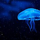 Small Jellyfish by Lauren Neely
