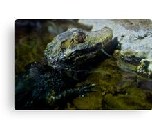 Little Crocodile Canvas Print