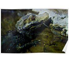 Little Crocodile Poster