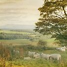 The Lancashire Countryside by patrixpix