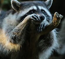 Raccoon Hanging Out on a Limb by THurdCreations