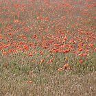 Poppy in the Mix by John Dunbar