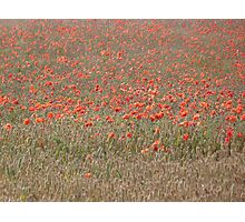 Poppy in the Mix Photographic Print