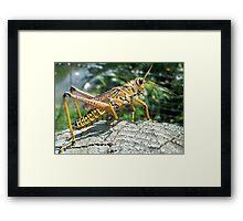 The Lone Grasshopper Framed Print
