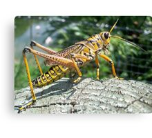 The Lone Grasshopper Canvas Print