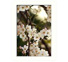 Japanese Cherry Blossoms I Art Print