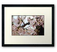 Japanese Cherry Blossoms IV Framed Print