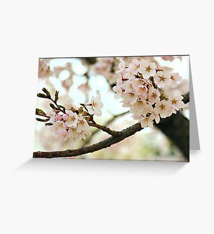 Japanese Cherry Blossoms V Greeting Card
