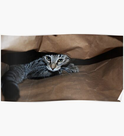 Cat In The Bag Poster