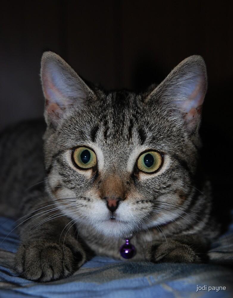 Portrait Of A Tabby Kitten by jodi payne