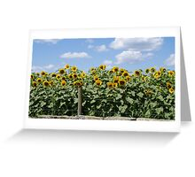 Yellow Sunflowers behind Stone Wall Greeting Card