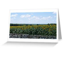 Yellow Sunflowers behind Stone Wall II Greeting Card